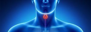 Thyroid Optimization Banner